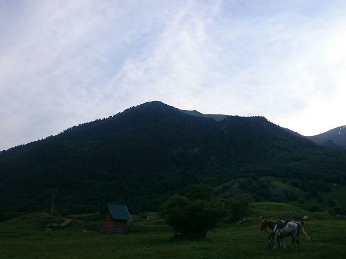 Mountain Taking Photos Mountain View Natural Beauty Wonderful Day Exiting горы Nature Relaxing Mountains Russia Enjoying Life Nice Beautiful Animals Dombay Horse домбай природа природа и красота животные лощади