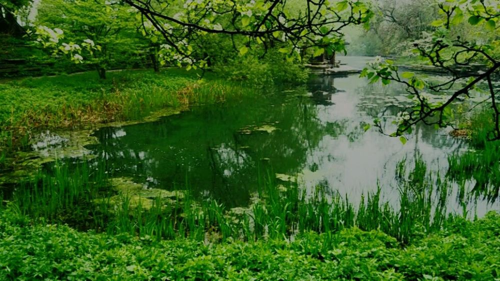 Alfred caldwell lily pond Nature On Your Doorstep Lily Pond Natural Beauty