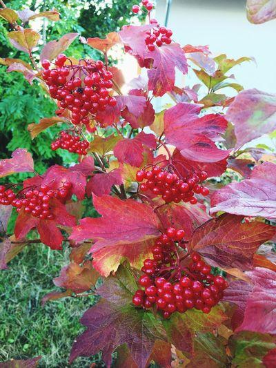 Autumn starting