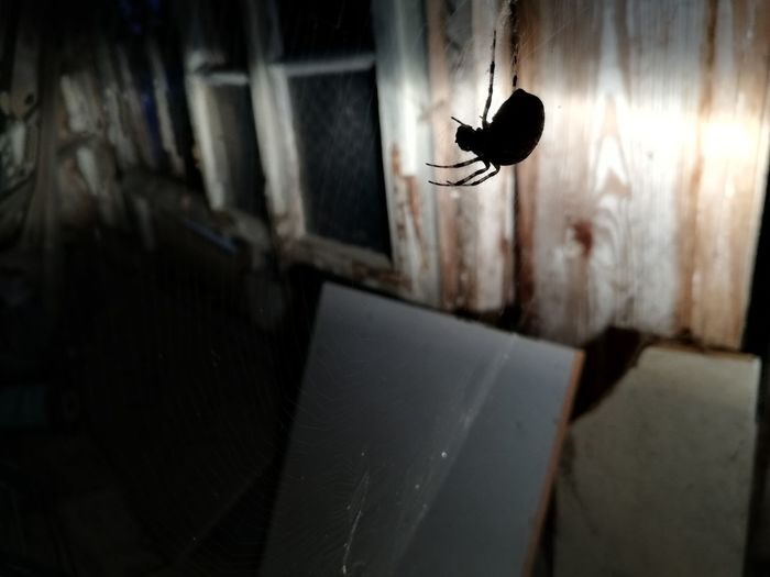 the spider EyeEm Selects Halloween Prison Spooky Horror Window Abandoned Deterioration Crime Scene Obsolete Weathered Run-down Peeled Civilization