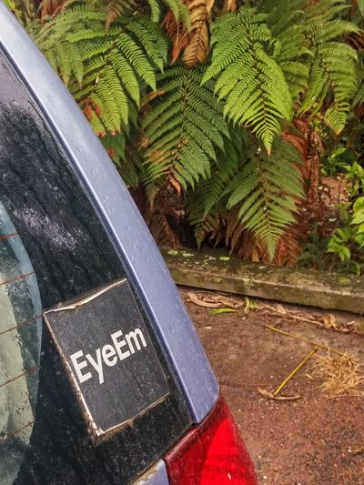 Adapted To The City High Angle View Communication Day Outdoors Text Close-up Welcome To My Gallery Holiday In New Zealand Photographylovers Once Upon A Time Were Not In Kansas Anymore Helena Bay Women Who Inspire You Tourist In My Own Country Tikitour Across New Zealand Roadtrip Summer Vibes Sand Raindrops Fern I WAS HERE EyeEm Weather Photography