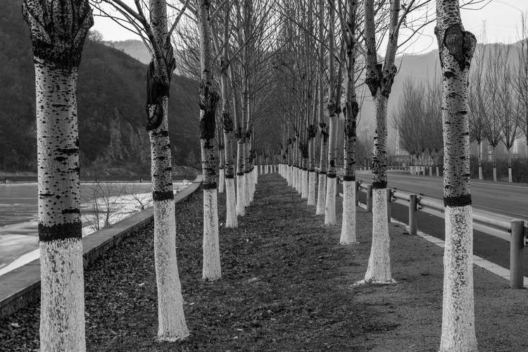 Trees in cemetery against sky