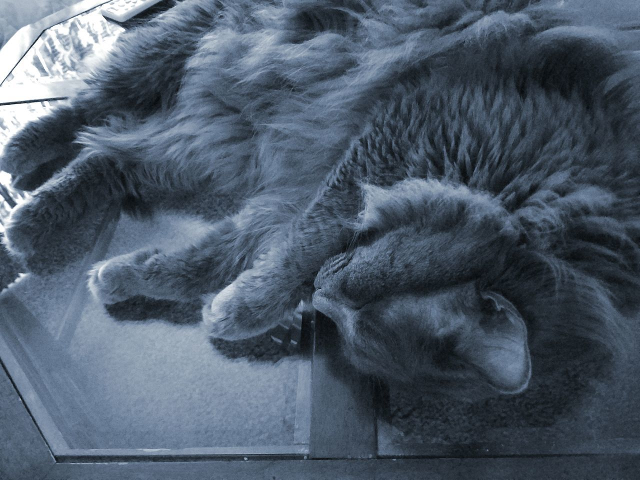 animal themes, one animal, mammal, sleeping, relaxation, no people, domestic animals, pets, lying down, domestic cat, indoors, close-up, feline, day