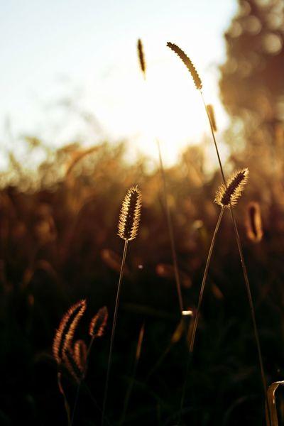 #Nature  #clearanddark #grains #naturalbeauty #softlight #sundown Clear Light And Shadow