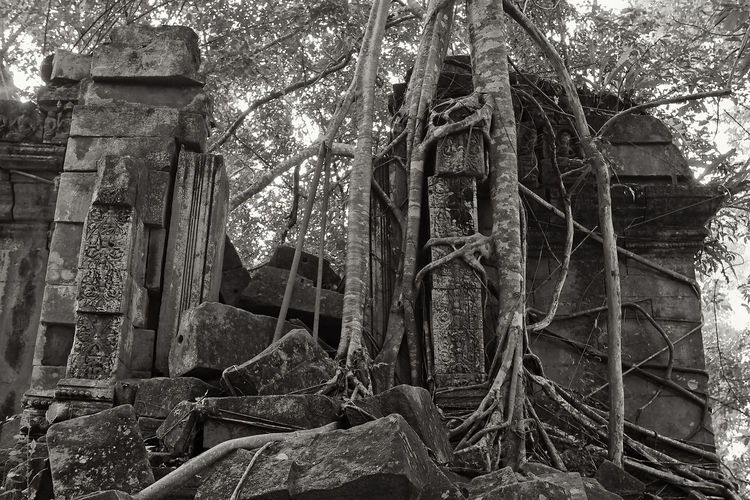 Old ruin building in forest