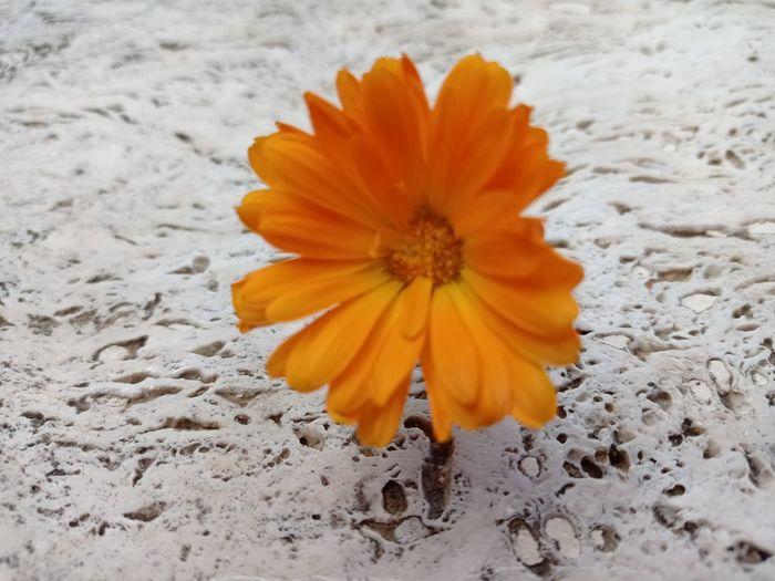 Close-up of orange flower on land