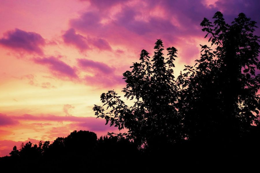 Sunset Silhouette Nature Beauty In Nature Tree Horizontal Dramatic Sky Social Issues No People Sky Forest Outdoors