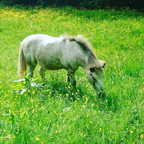 Grass Horse