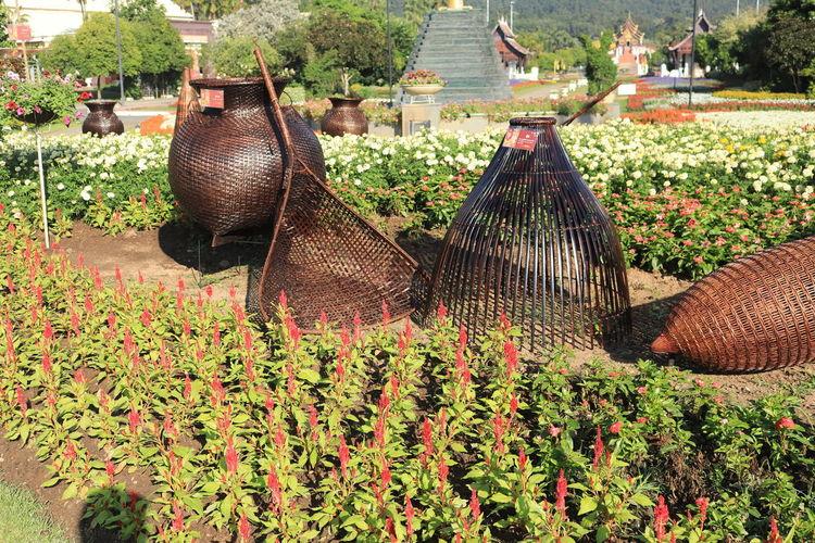 อุทยานหลวงราชพฤกษ์ อุทยานหลวงราชพฤกษ์ ราชพฤกษ์ Plant Growth Nature Flower Day Flowering Plant Agriculture Freshness Outdoors No People Beauty In Nature Field Garden Green Color Land Food Large Group Of Objects Architecture Focus On Foreground Rural Scene