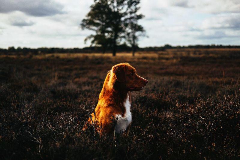 Dog's life Dog