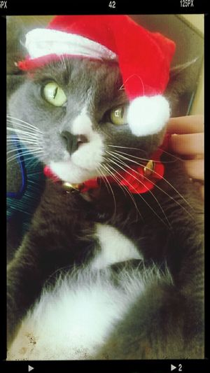 "Stormy says ""Merry F*cking Christmas."" How You Like Me Meow?"