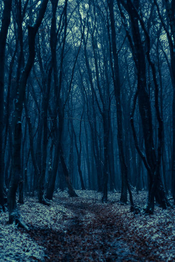 Cold Cold Temperature Dark Forest It's Cold Outside Nature Outdoors Showcase: January Snow Tree Tree Trees Weather Winter Wood Wood Wood - Material Wooden WoodLand