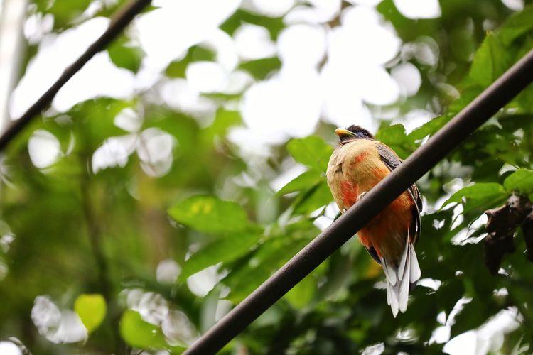 혹시.. 화났니? . . #하루한컷 #필리핀 #보홀 #앵그리버드 #5DMARK4 #새아빠백통 #EF70200F28LIIISUSM Bird Perching Tree Branch Defocused Parrot Animal Themes Close-up