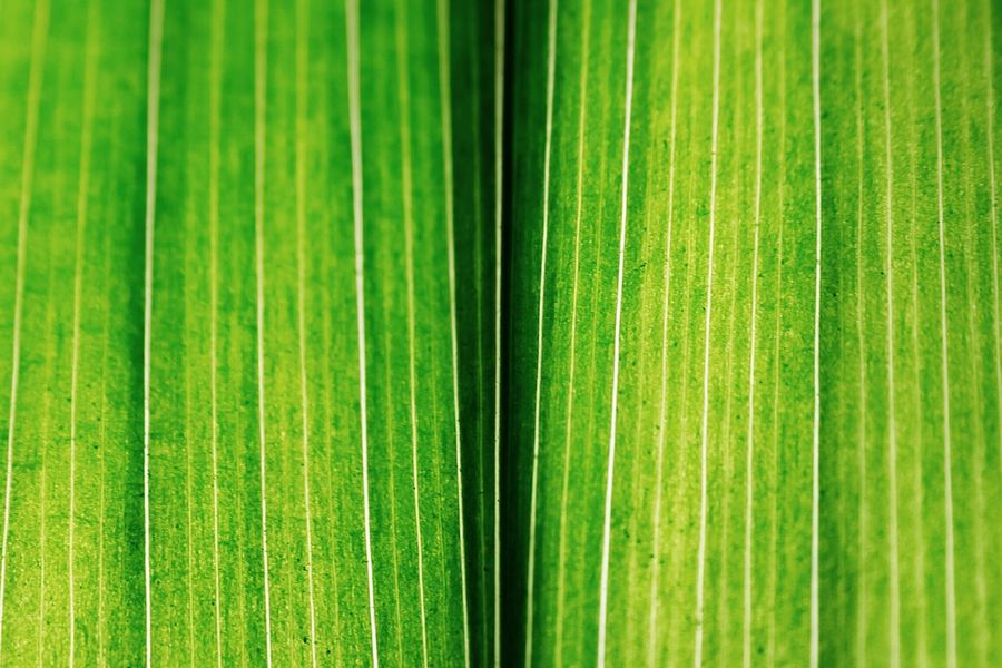 Green - Textures And Surfaces Minimalism Simplicity Nature_collection Macro_collection Macro Eye4photography  Shuttermag EyeEm Nature Lover EyeEm Best Shots