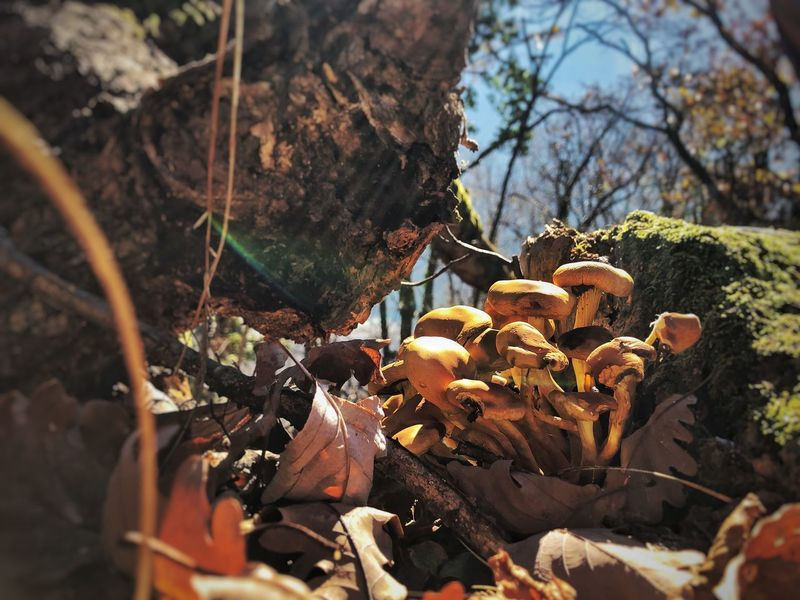 Nature Mushrooms Feltre Italy🇮🇹 Plant Nature Growth Day Tree Sunlight No People Selective Focus Close-up Land Focus On Foreground Outdoors Plant Part Forest Field Leaf Tranquility Beauty In Nature Trunk Cactus