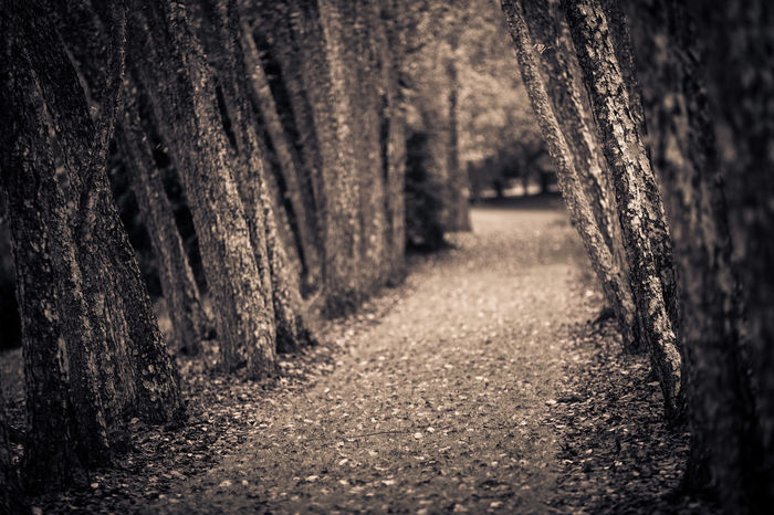 """Should I stay or should I go "" Absence Brown Choice Close-up Dream Eerie Ethereal Fear Forward Leading Leading Lines Monochrome Mystery Narrow Old Path Plank Selective Focus Surface Level Textured  The Way Forward Tree Trunk Weathered Wood Wooden"