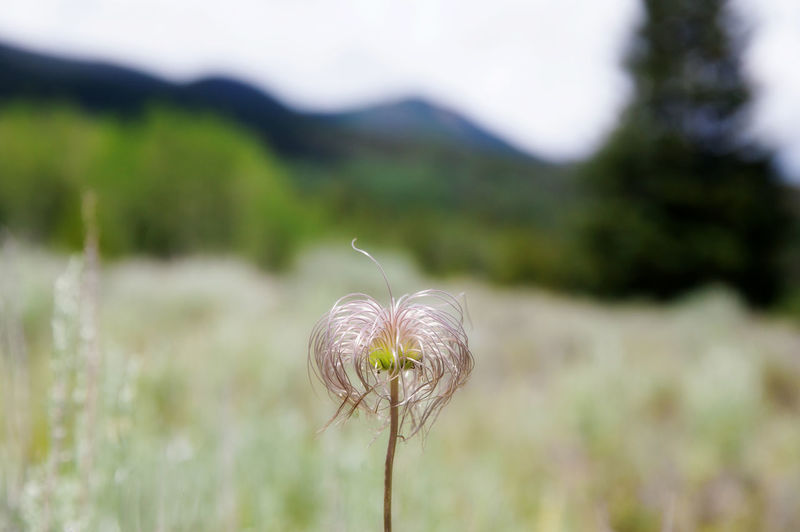 Beauty In Nature Field Focus On Foreground Grass Grassy Growth Landscape Mountains Nature No People Outdoors Plant Selective Focus Sky Stem Tranquility Wildflowers In Bloom Wildlife & Nature