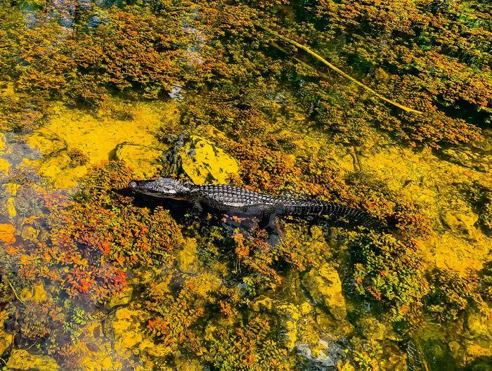 High angle view of yellow leaf on lake