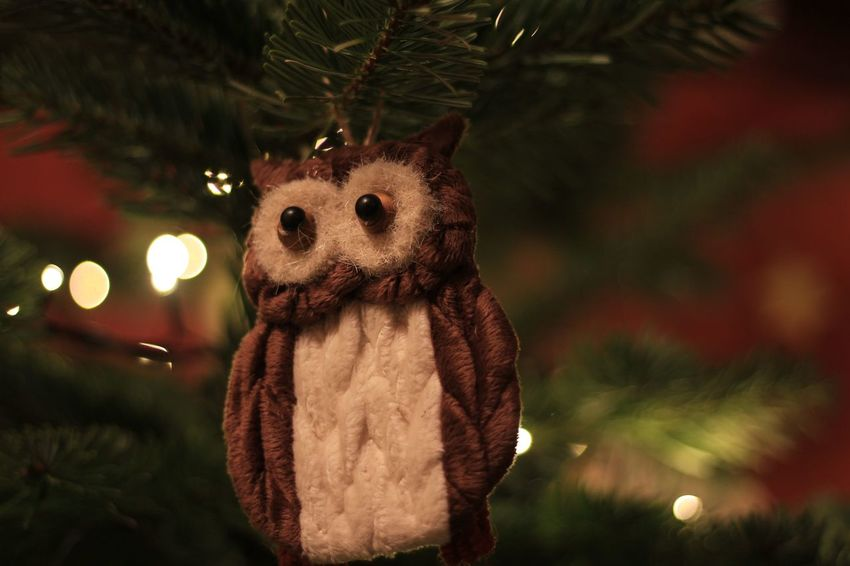 No. 104 shot the 7th December 2016 at 18:15h with the Canon EOS 600D and the Canon EOS 50mm f/1.8 lens (ISO 100 | 1/13 | f/1.8) Shot in RAW and edited in Apple Photos. Branch Celebration Childhood Christmas Christmas Decoration Christmas Tree Close-up Indoors  Nature Night No People Stuffed Toy Teddy Bear Tree