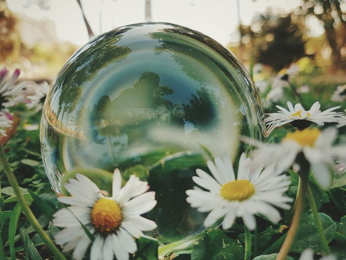 "Showcase April ""Spring Selfie"" EyeEm Best Shots EyeEm Nature Lover EyeEm Best Edits EyeEm Shootermag Mobilephotography EyeEm Gallery Cristal Ball Glass Ball"