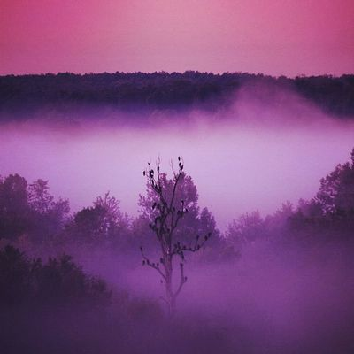 The Crows Nest (sunrise shot) #popular #igla #instagramhub #instagood #instaaaaah #the_guild #tree #fog #igersmissouri #crows #layers #missouri Tree Landscapestyles_trees_001 Violet _wg Crows Jj_pink_ribbon Popular Jj_forum_0305 Picoftheday Layers Earlybird Missouri Instagood Instaaaaah Instagramhub Hbtree The_guild Altexpo Igla Fog Igersmissouri