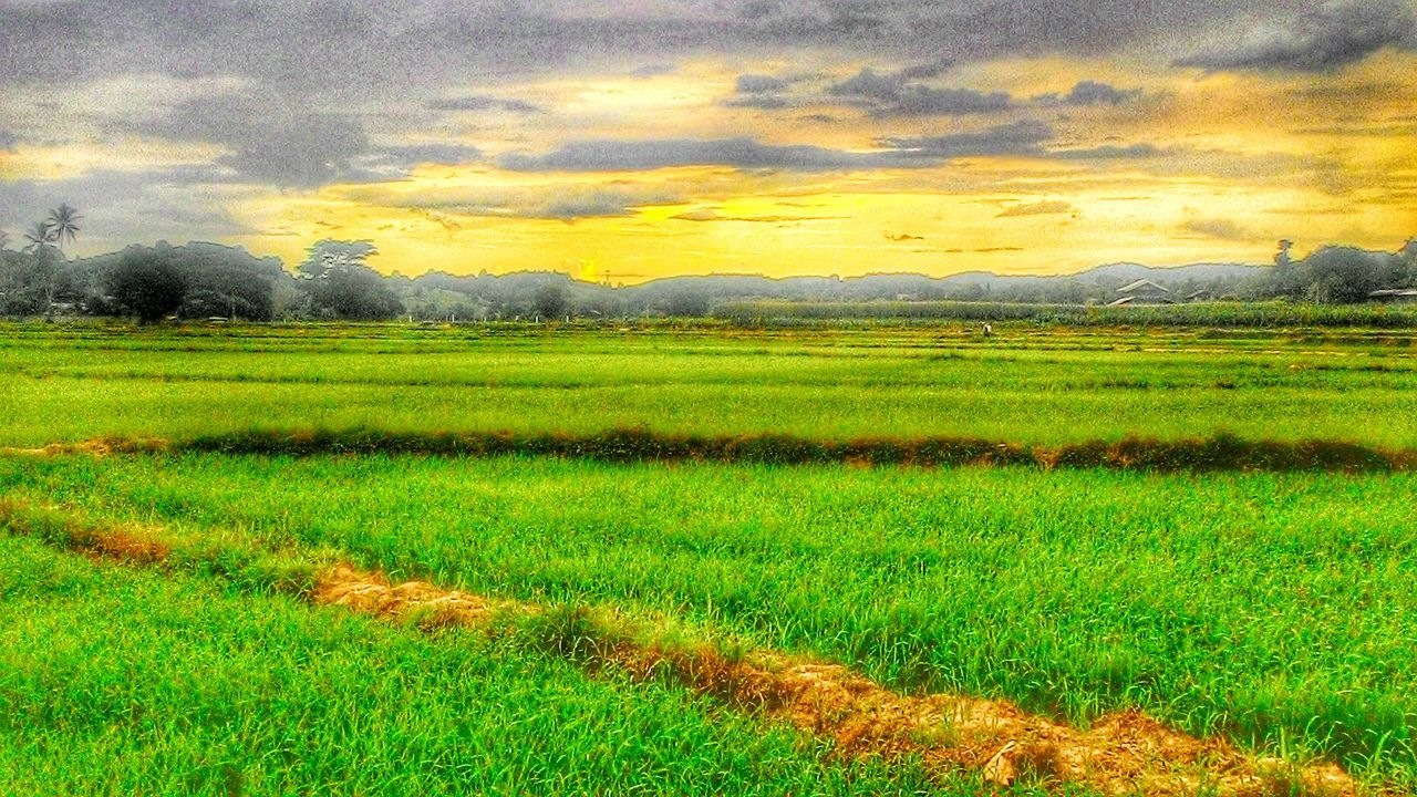 field, nature, landscape, scenics, beauty in nature, rural scene, grass, agriculture, tranquility, cloud - sky, tranquil scene, rice paddy, green color, no people, sunset, sky, mountain, outdoors, growth, day