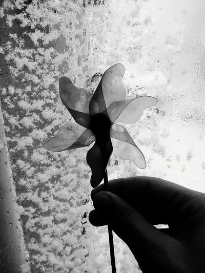 City Rüzgar Gülü Blackandwhite Istanbul Turkey EyeEm Best Shots Turkey The Great Outdoors - 2016 EyeEm Awards Old City Life Eye4photography  First Eyeem Photo EyeEm Gallery EyeEm Best Shots - Black + White Water Art Eyeemphoto Urban Geometry Cool Foto Yağmur Swimming Cam Doğa WOW Working