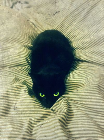 Alert Alertness Animal Themes Black Cat Bright Eyes Cat On The Bed Close-up Day Directly Above Domestic Animals Domestic Cat High Angle View Indoors  Linen Texture Mammal One Animal One Person Patern People Pets Stripes Pattern Watching You Yellow Eyes