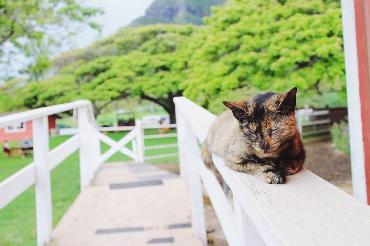 Hawaii Travel Kualoa Cat Cat♡