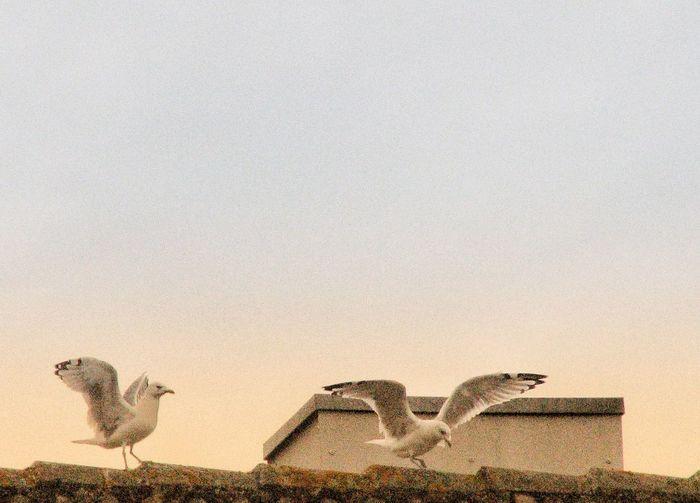 Birds on wall against sky