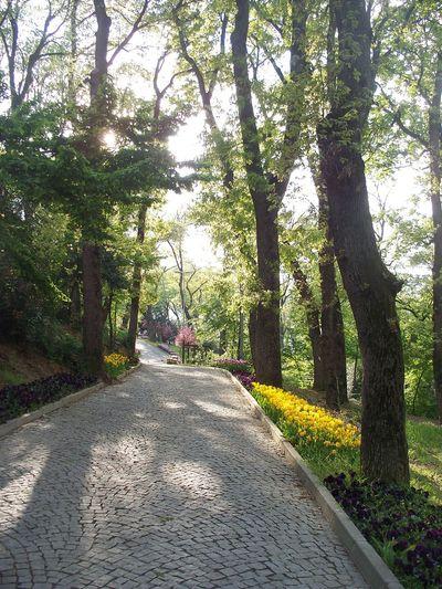 Tree Green Color Beauty In Nature No People Road Koru Travel Photography Büyükçamlıca Landscape Istanbul Turkey Day