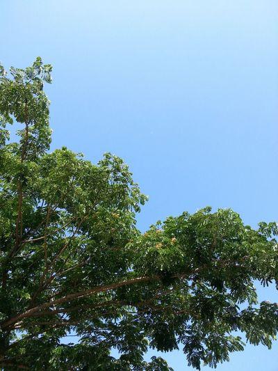 Nature meet Sky