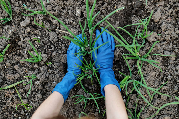 Midsection of woman holding plants on field