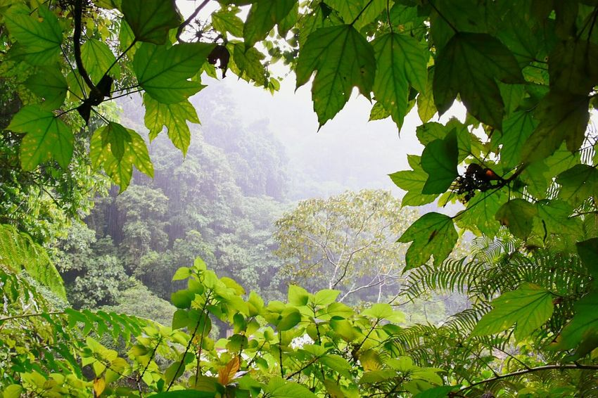 Leaf Nature Tree Environmental Conservation Forest Social Issues Tropical Climate Beauty In Nature Freshness Green Color Plant Mountain Branch No People Water Day Outdoors Sky Tea Crop