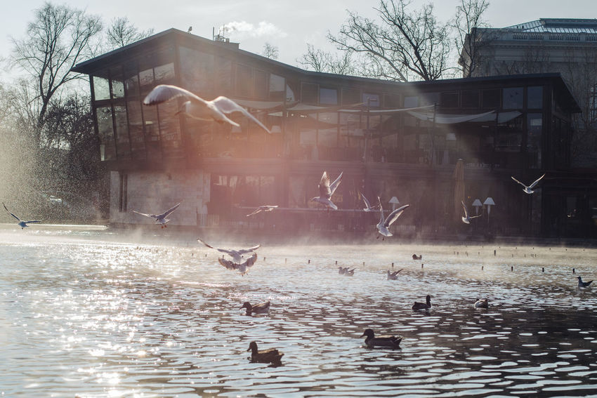 Waiting for spring Architecture Backlight Birds Building Exterior Built Structure Flying Lake Motion No People Park Steam Water