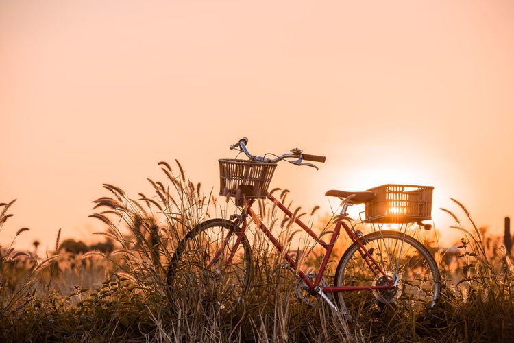 Sky Sunset Plant Nature Transportation Grass Field Mode Of Transportation Land Copy Space Bicycle No People Land Vehicle Clear Sky Orange Color Outdoors Growth Beauty In Nature Animal Vertebrate Wheel