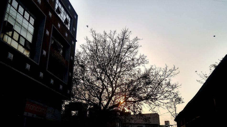 EyeEmNewHere Sky Sunset No People Low Angle View Building Exterior Architecture Outdoors Day Graphics Artistic Architecture Beauty In Nature Close-up NewEyeEmPhotographer Like4like Indoors  NewHere ✌🏽️😄 Flower Head Communication EyeEmNewHere