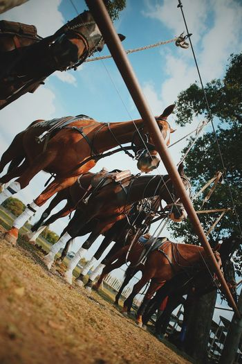 Sky Low Angle View Nature Day Cloud - Sky Amusement Park Ride Plant Amusement Park Outdoors No People Domestic Animal Animal Wildlife Tree Horse Animal Themes Swing Mammal Domestic Animals Outdoor Play Equipment