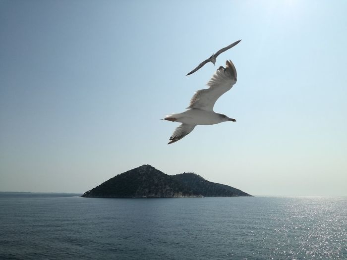 Flying Water Sea Spread Wings Sky Nature Seagull Freedom
