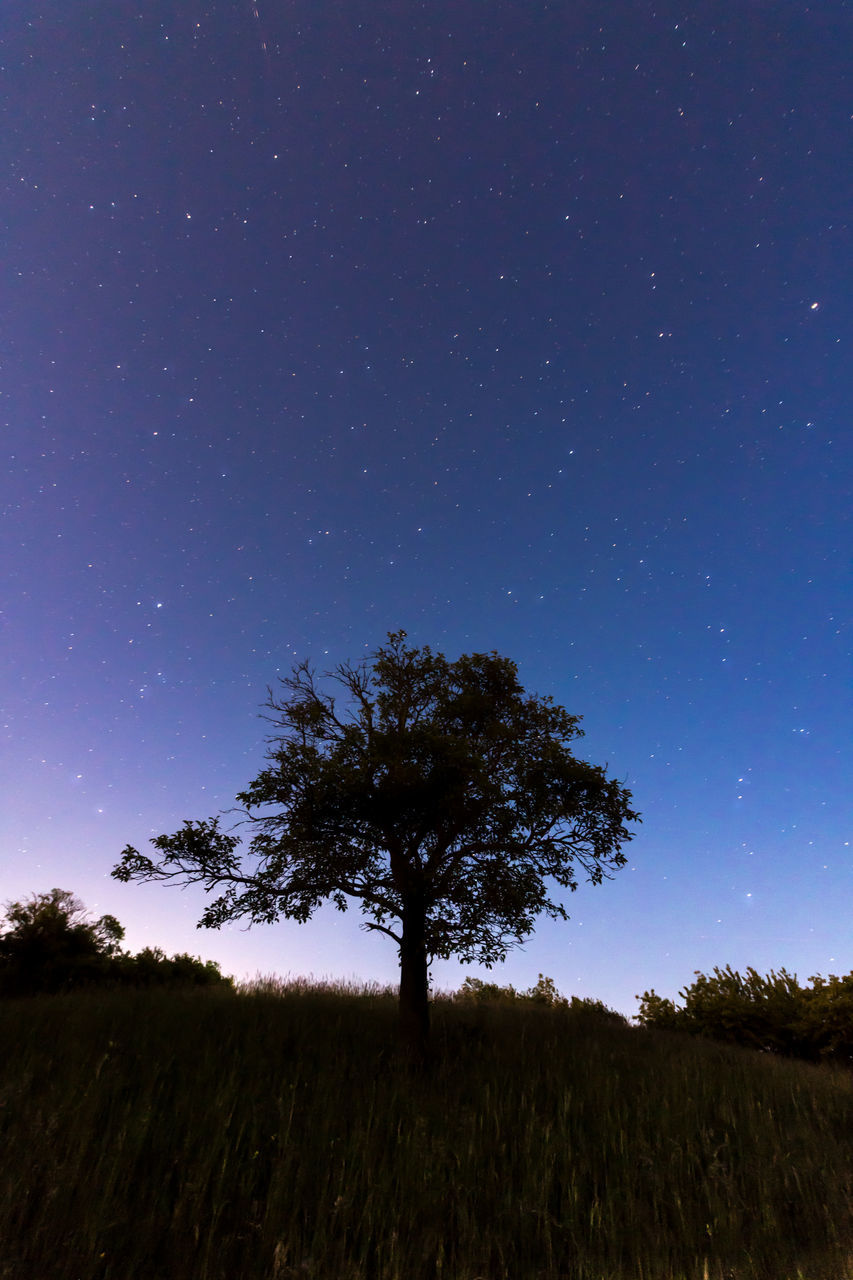 sky, tree, night, plant, field, beauty in nature, star - space, tranquility, land, scenics - nature, tranquil scene, nature, space, landscape, astronomy, environment, growth, no people, star, blue, outdoors, moonlight