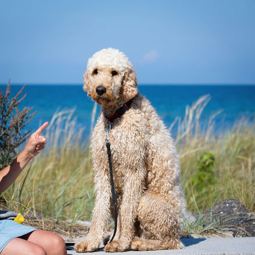 Beach Big Dog Blue Blurred Background Breed Dog Day Dog Dogs Of EyeEm Doodle FUNNY ANIMALS Hand Horizon Over Water Index Finger Looking At Camera Outdoors Sad Sea Show Sitting Outside Sky Summertime Teddy Bear Vacations Water Woman