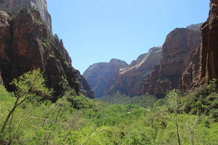 Trees And Plants Amidst Rock Formation At Zion National Park