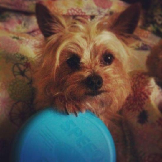 Fido Dog Play Frisbee