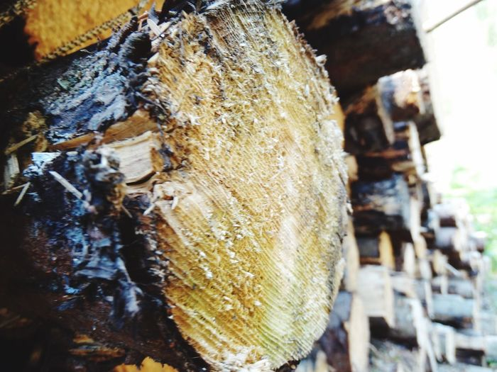Logs. Pile Of Logs Log Pile Logs Close-up Focus On Foreground Wood - Material No People Tree Nature Day Textured  Log Outdoors Fuel And Power Generation Wood Timber Firewood Fossil Fuel Deforestation Tree Trunk Trunk Forest