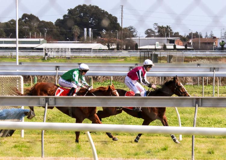 Jumps Horses Ban Jumps Racing Hurdles EyeEm Selects Horse Racing Competition Sports Race Sport Sports Track Jockey Horseback Riding Men Bridle Saddle Horse