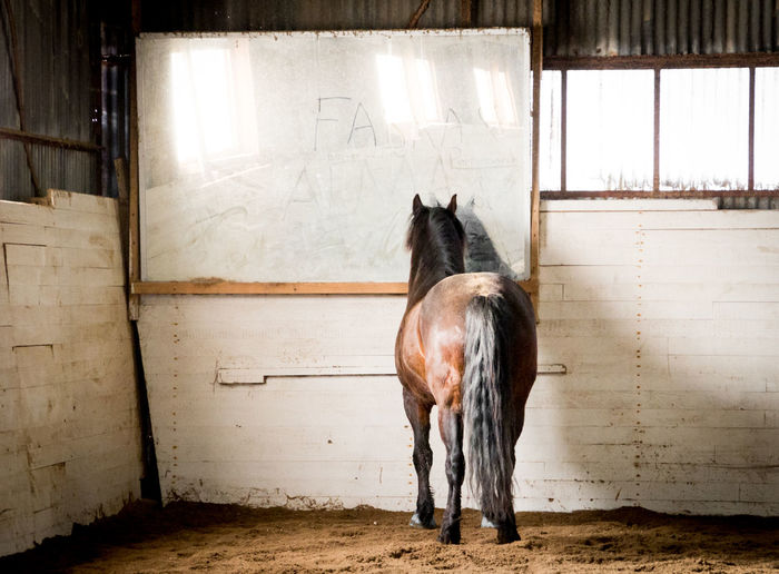 """""""Yes, I am the fairest of them all..."""" Animal Themes Animals Domestic Animals Dust Horse Horses Indoors  Is There Anybody In There? Mirror Reflection No People"""