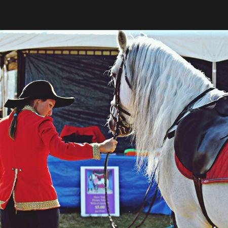 Lipizzaner Horse Equine Artsy Fartsy