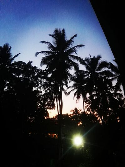 Tree Palm Tree Goa India. Love Silhouette Low Angle View Tree Trunk Growth Sky Night Nature Beauty In Nature No People Sunset Scenics Outdoors Blue