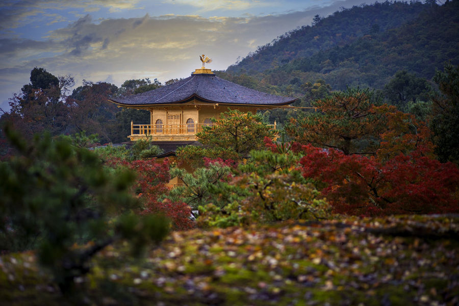 kinkakuji temple kyoto japan in autumn season Built Structure Building Exterior Architecture Building Mountain No People Belief Beauty In Nature Religion Autumn Place Of Worship Sky Outdoors Kinkakuji Kinkakuji Temple Kinkaku-ji Golden Pavilion Kinkakuji Temple Of Japan Kinkaku-ji Kyoto Travel Traveling Place Of Worship Worship Temple Gold
