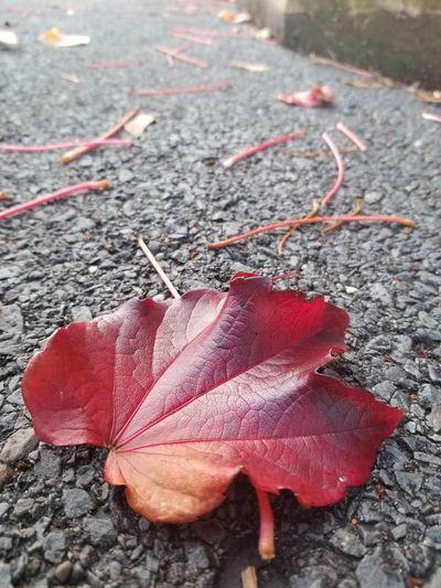 Rainy Days Leaf